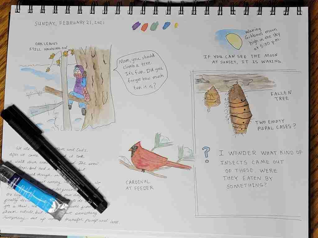 I-Wonder-Nature-Journal-Page
